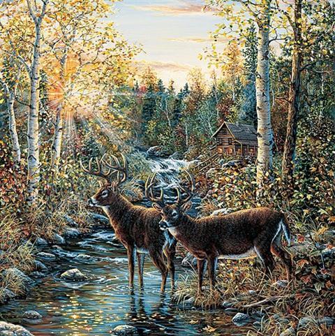 Images Whitetail Deer Wallpaper Border